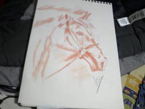 horse sanguine
