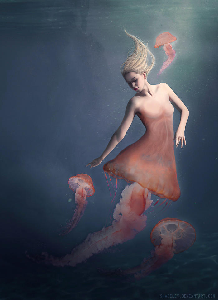 The Jellyfish by shadeley