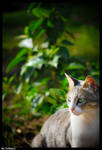 Model: Cat
