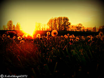 Dandelion Sunset by NODSOLDIERGIRL