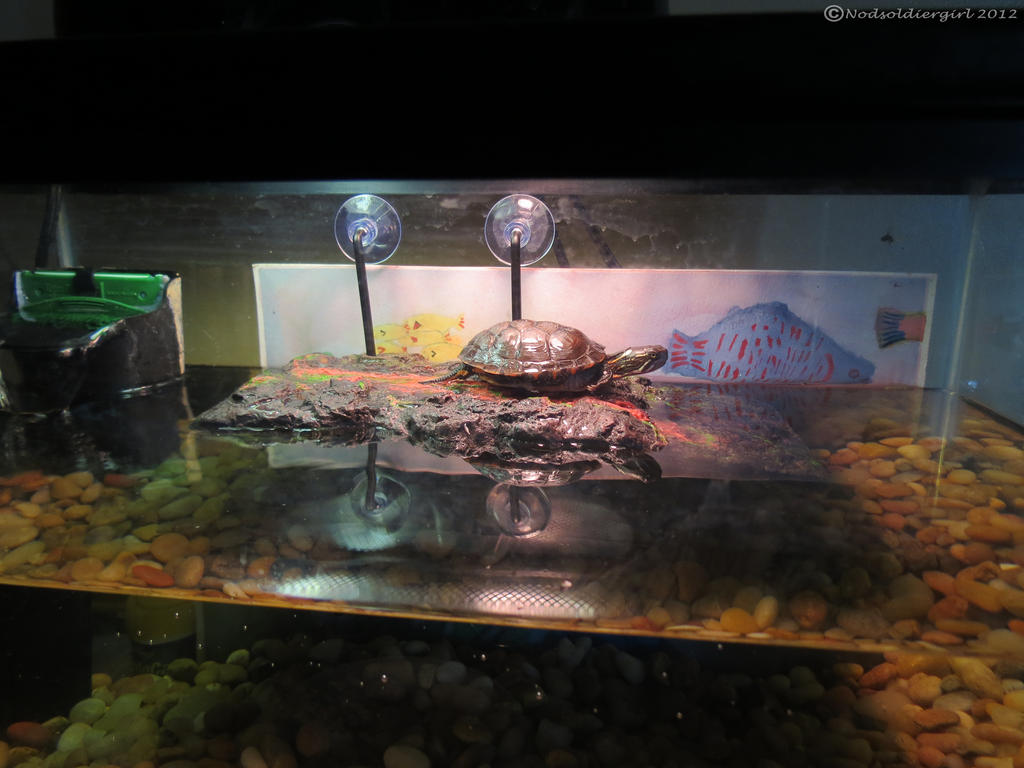 Turtle tank setup snapping turtle tank setup youtube for How to setup a freshwater fish tank