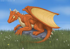 Young Dragon by thazumi