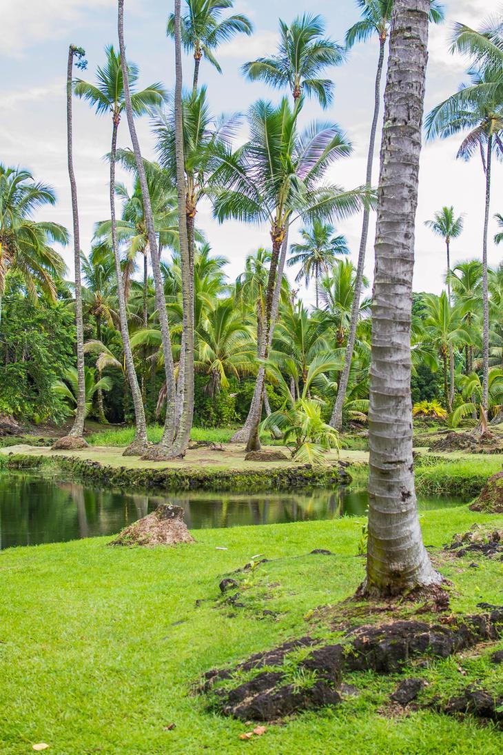 Palm ponds by Daggettgirl