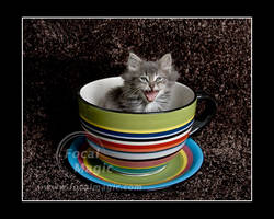 Kitty in a TeaCup 2 by NicoleSlaughter
