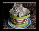 Kitty in a TeaCup 3