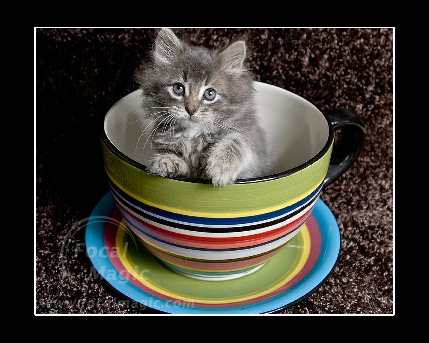 The Cute Cat Thread 26a17f7cce2cc455f97eff834bc9b452