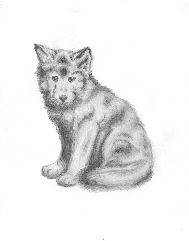 Realistic Baby Wolf Drawing