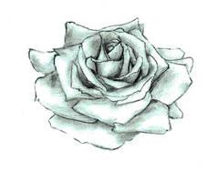 Rose by Katalisk