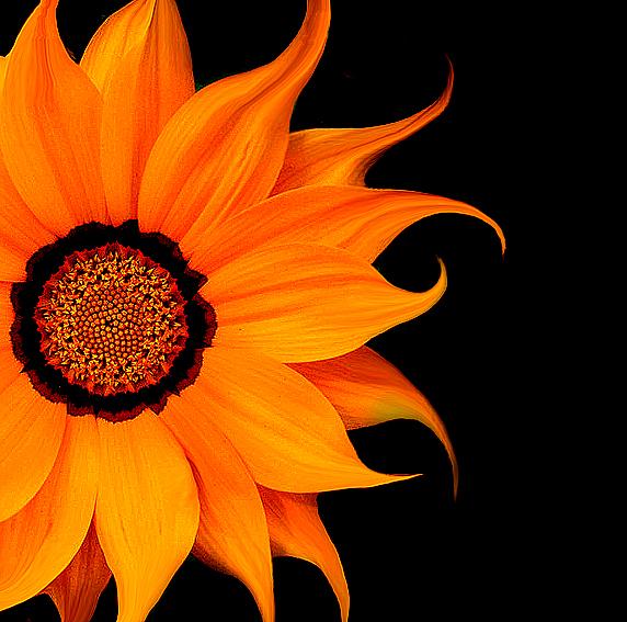 Flower II by tas-poetry