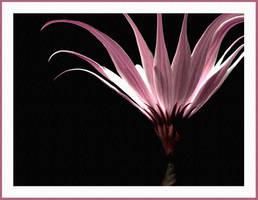 Flower IV by tas-poetry