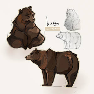 Animal Studies / bears