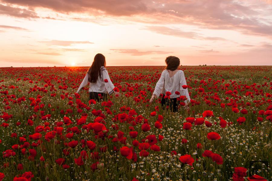 Red flowers in Dobrogea | Sanziene by simonamoon