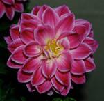 Flower Stock 59