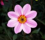 Flower Stock B8