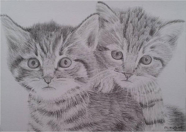 Kittens Drawing By Megh95 On DeviantArt