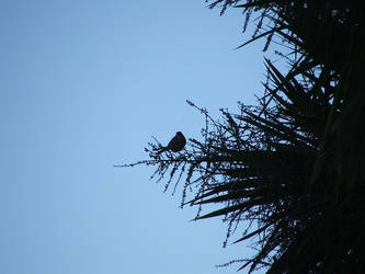 Sparrow in a Tree by wolviechick121