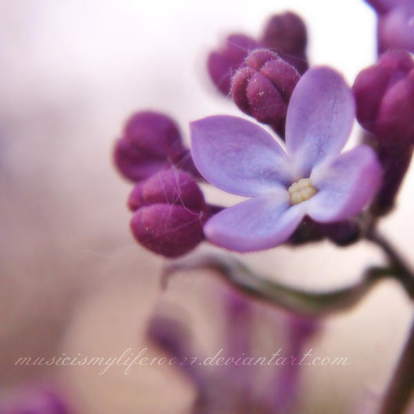 Delicately. by musicismylife10027