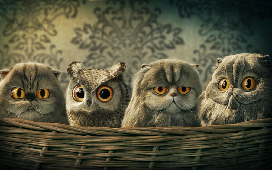 Lomo Owl by carlsonwkk