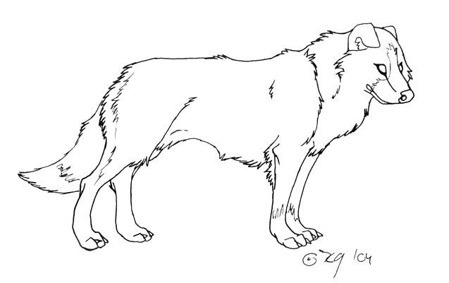 Rough collie drawing coloring pages for Border collie coloring pages