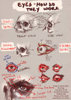 Eyes : How do they work - Analysis by RuxandraLache