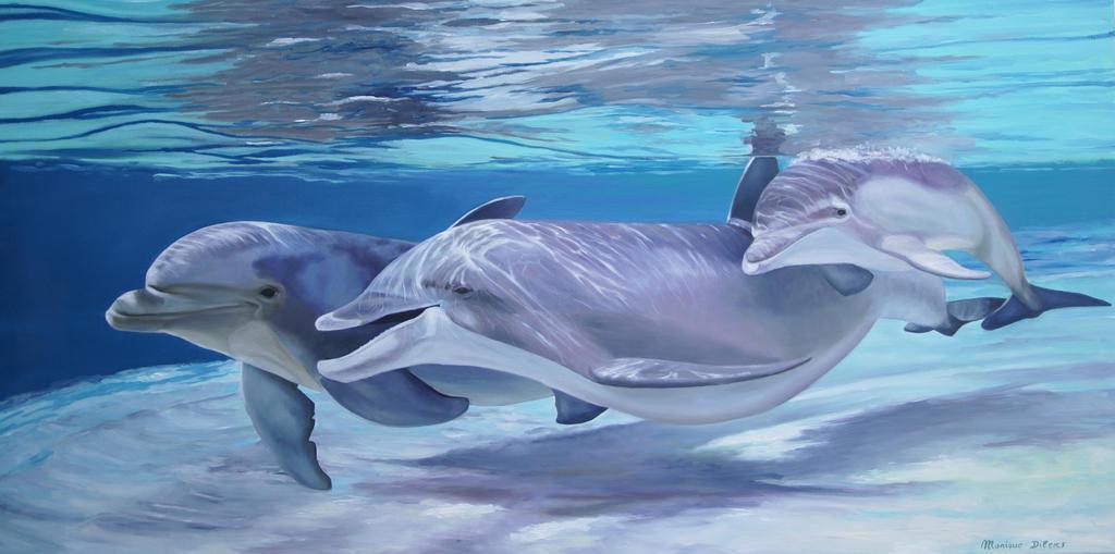 dolphins wallpaper 3d