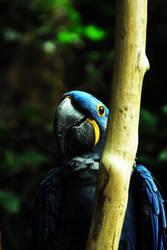 a parrots dream by Kalasis