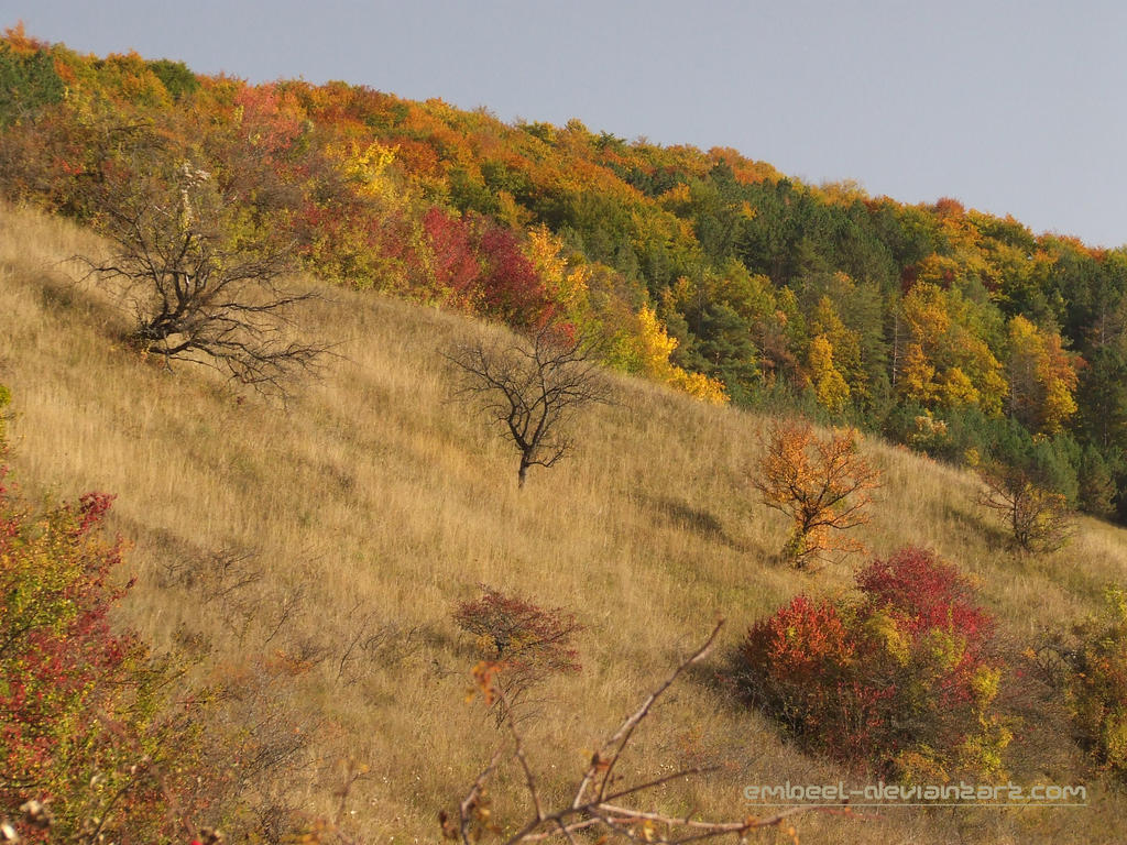 True Colors Of Fall by eMBeeL