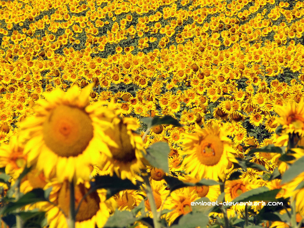 The Yellow Army of Summer by eMBeeL