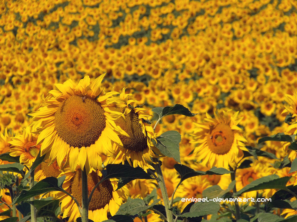 Leaders Of The Yellow Army Of Summer by eMBeeL