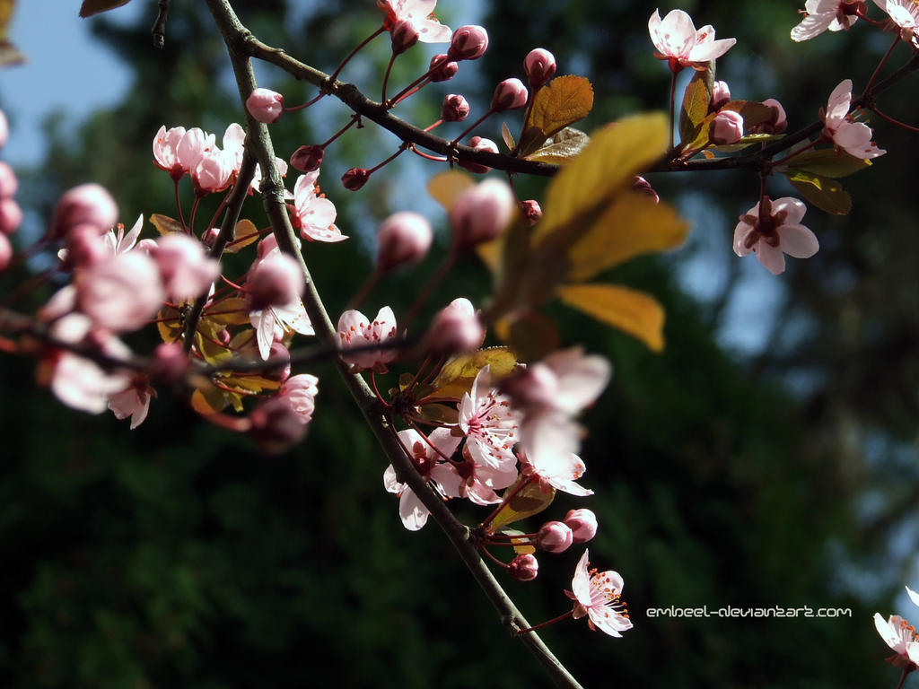 Common Spring Theme... by eMBeeL