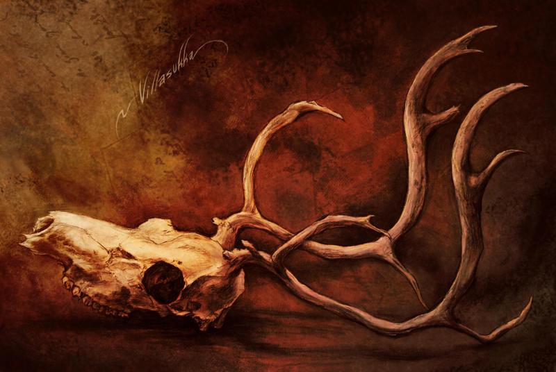 Skull by villasukka