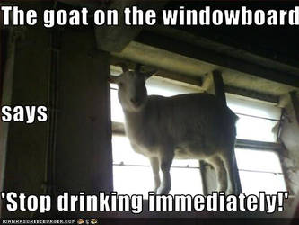 Goat on the windowboard by CaveLupa