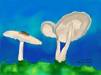 Mushroom by SeventhFairy