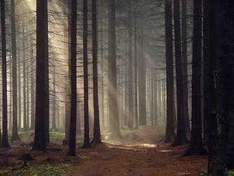 Forest by kafik
