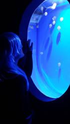 Jellyfish by iBlueLeaf