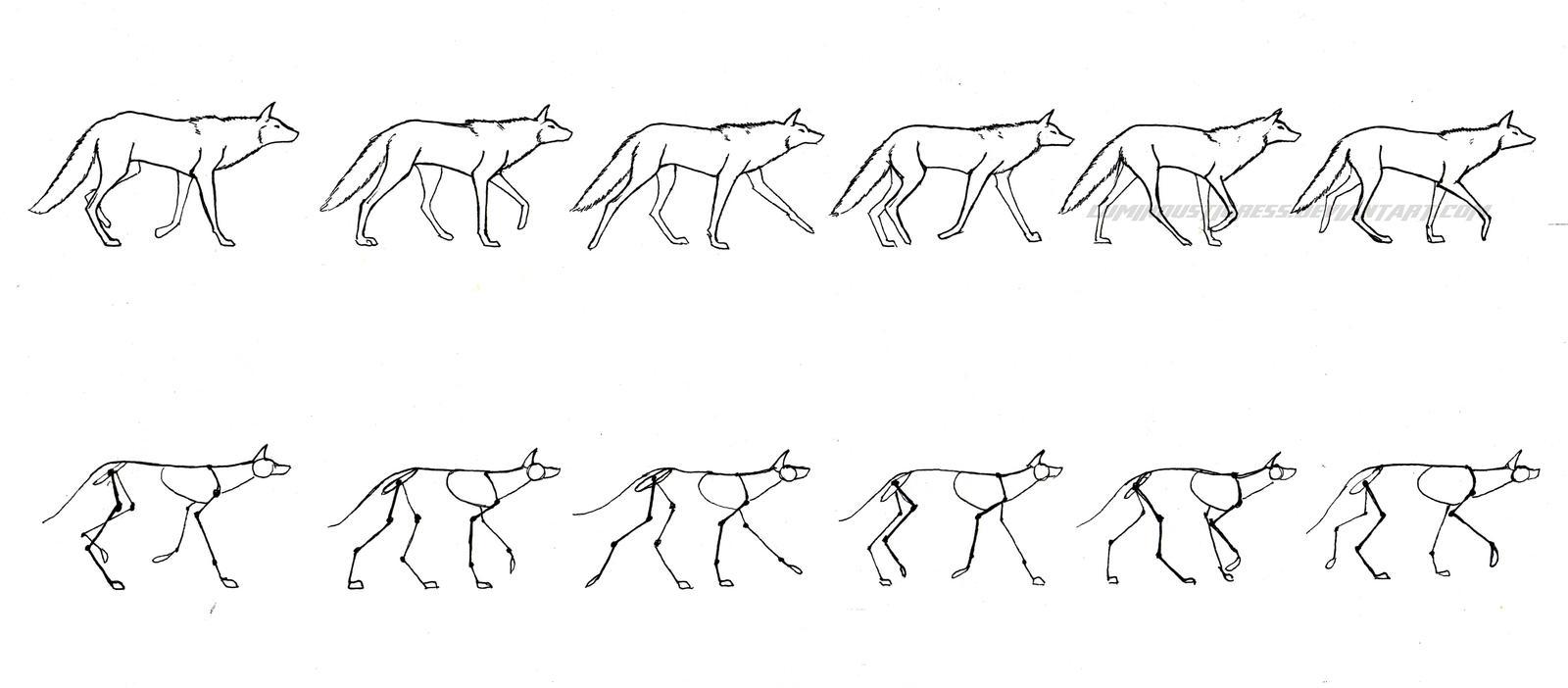 Wolf walking cycle by Axxirah on DeviantArt