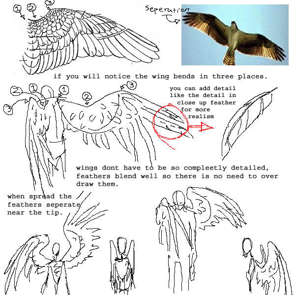 Anime Angel Wings Tutorial