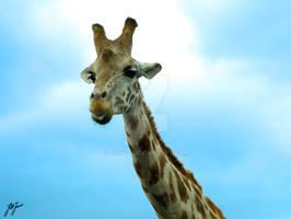 giraffe pokin out his tounge