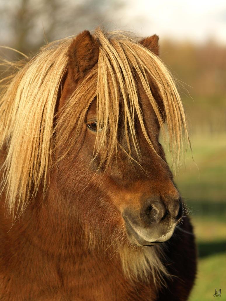 beautiful pony by JillvJ