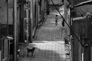 Dog in the Alley
