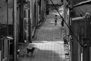 Dog in the Alley by danthegtaman2