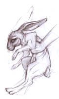 Bunneh Sketch