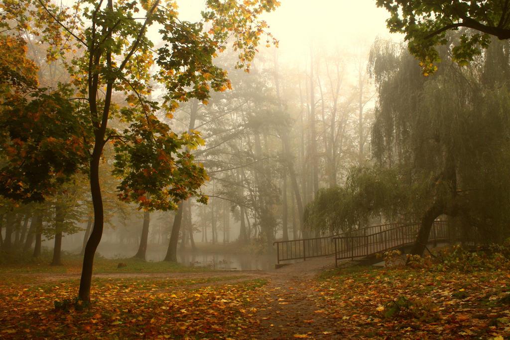 park... by mirandaarts