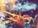 lilia... by mirandaarts