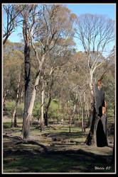 Australian Bush by w-o-l-d-o