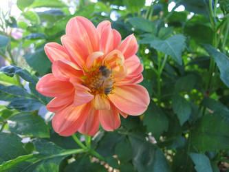 Flower Bee by w-o-l-d-o