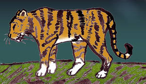 Tiger - coloured by Atris-M