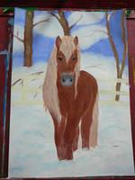 Winter horse by Atris-M