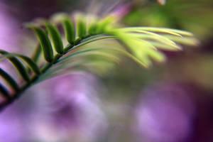 Ferny by Aziot