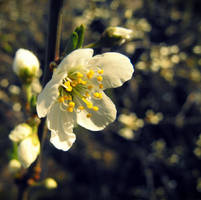 Spring love by screamst